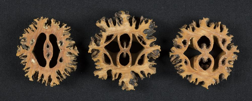 Butternut badges worn by IU students who were southern sympathizers during The Civil War