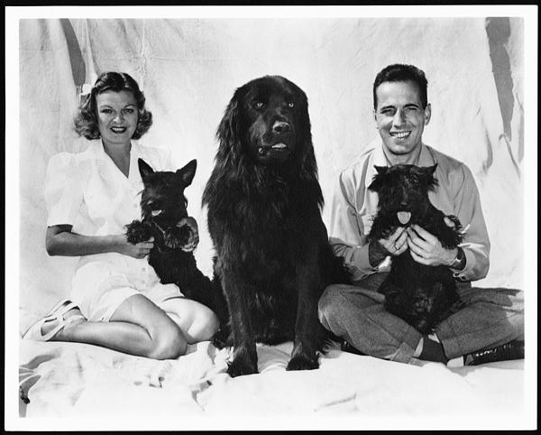 Humphrey Bogart with unidentified woman and three dogs.