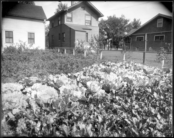 City, Garden at 732 Maryland St.